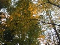 中尊寺リハビリの菊祭り&紅葉2014-11-10-044