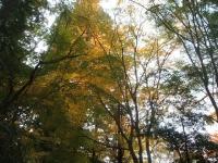中尊寺リハビリの菊祭り&紅葉2014-11-10-043