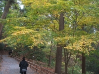 中尊寺リハビリの菊祭り&紅葉2014-11-10-042