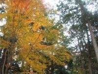 中尊寺リハビリの菊祭り&紅葉2014-11-10-041