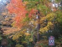 中尊寺リハビリの菊祭り&紅葉2014-11-10-040