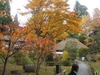 中尊寺リハビリの菊祭り&紅葉2014-11-10-047