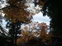 中尊寺リハビリの菊祭り&紅葉2014-11-10-052