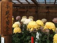 中尊寺リハビリの菊祭り&紅葉2014-11-10-063