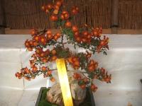 中尊寺リハビリの菊祭り&紅葉2014-11-10-059