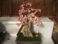 中尊寺リハビリの菊祭り&紅葉2014-11-10-058