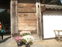 中尊寺リハビリの菊祭り&紅葉2014-11-10-074