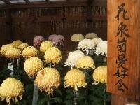 中尊寺リハビリの菊祭り&紅葉2014-11-10-064