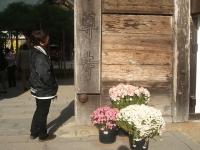 中尊寺リハビリの菊祭り&紅葉2014-11-10-075