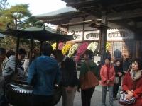中尊寺リハビリの菊祭り&紅葉2014-11-10-081