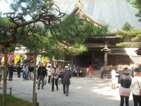 中尊寺リハビリの菊祭り&紅葉2014-11-10-076