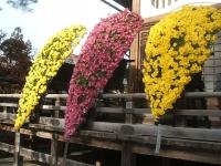 中尊寺リハビリの菊祭り&紅葉2014-11-10-087