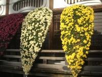 中尊寺リハビリの菊祭り&紅葉2014-11-10-085