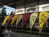 中尊寺リハビリの菊祭り&紅葉2014-11-10-084