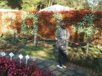 2014-09-21薔薇-164