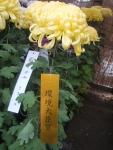 中尊寺リハビリの菊祭り&紅葉2014-11-10-091