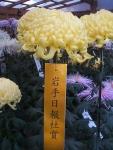 中尊寺リハビリの菊祭り&紅葉2014-11-10-098