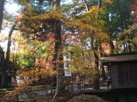 中尊寺リハビリの菊祭り&紅葉2014-11-10-107