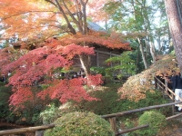 中尊寺リハビリの菊祭り&紅葉2014-11-10-106