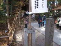 中尊寺リハビリの菊祭り&紅葉2014-11-10-116