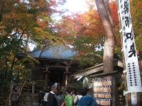 中尊寺リハビリの菊祭り&紅葉2014-11-10-115