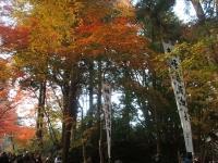 中尊寺リハビリの菊祭り&紅葉2014-11-10-114