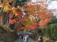 中尊寺リハビリの菊祭り&紅葉2014-11-10-122