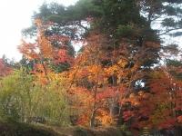 中尊寺リハビリの菊祭り&紅葉2014-11-10-121