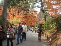 中尊寺リハビリの菊祭り&紅葉2014-11-10-120