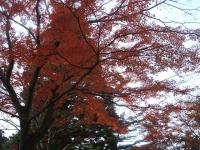 中尊寺リハビリの菊祭り&紅葉2014-11-10-118
