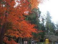 中尊寺リハビリの菊祭り&紅葉2014-11-10-127