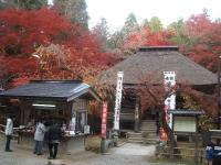 中尊寺リハビリの菊祭り&紅葉2014-11-10-135