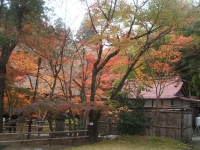 中尊寺リハビリの菊祭り&紅葉2014-11-10-131