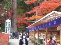 中尊寺リハビリの菊祭り&紅葉2014-11-10-140