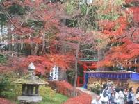 中尊寺リハビリの菊祭り&紅葉2014-11-10-139