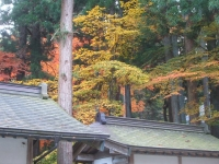 中尊寺リハビリの菊祭り&紅葉2014-11-10-138