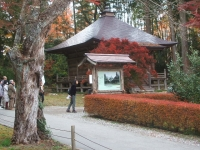 中尊寺リハビリの菊祭り&紅葉2014-11-10-137