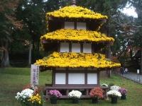 中尊寺リハビリの菊祭り&紅葉2014-11-10-136