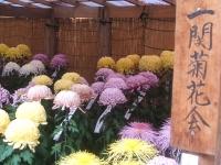 中尊寺リハビリの菊祭り&紅葉2014-11-10-142