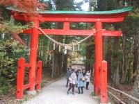 中尊寺リハビリの菊祭り&紅葉2014-11-10-151