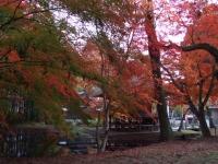 中尊寺リハビリの菊祭り&紅葉2014-11-10-175