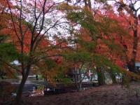 中尊寺リハビリの菊祭り&紅葉2014-11-10-174