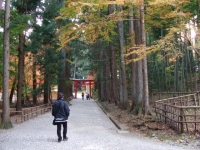 中尊寺リハビリの菊祭り&紅葉2014-11-10-172