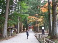 中尊寺リハビリの菊祭り&紅葉2014-11-10-171