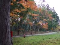 中尊寺リハビリの菊祭り&紅葉2014-11-10-170