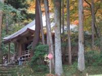 中尊寺リハビリの菊祭り&紅葉2014-11-10-179