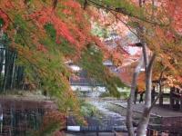 中尊寺リハビリの菊祭り&紅葉2014-11-10-178