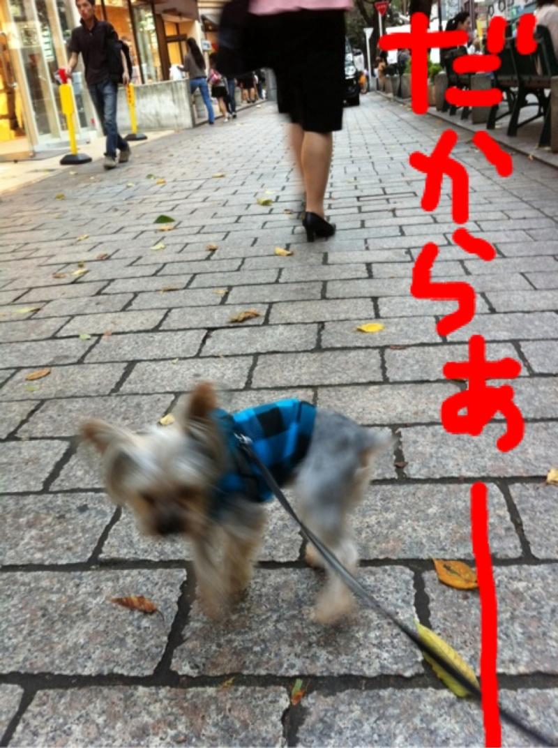 photo:12