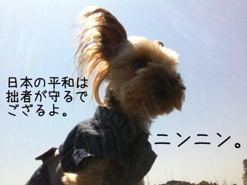 photo:10