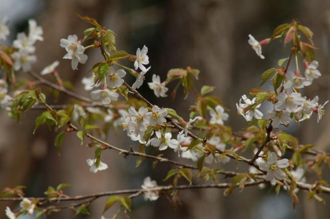 2013-04-18こめらの森周辺にて (3)